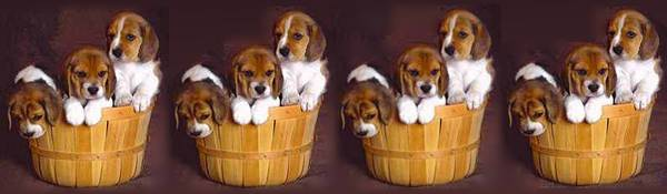4 baskets 3 puppies