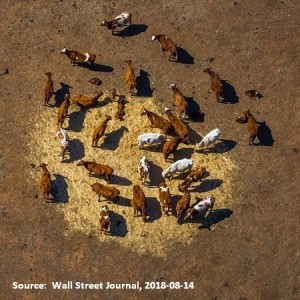 Cattle ranch in Aussie drought